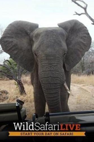 Wild Safari Live next episode air date poster