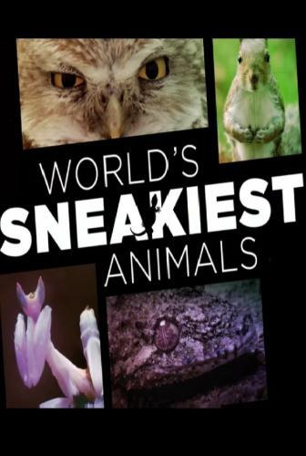 World's Sneakiest Animals next episode air date poster