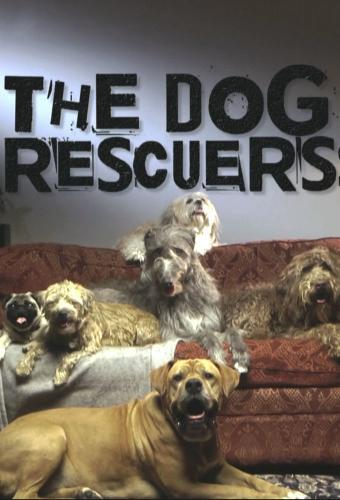 The Dog Rescuers with Alan Davies next episode air date poster