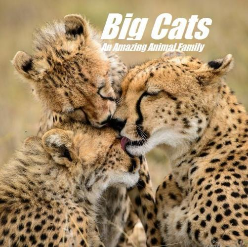 Big Cats: An Amazing Animal Family next episode air date poster