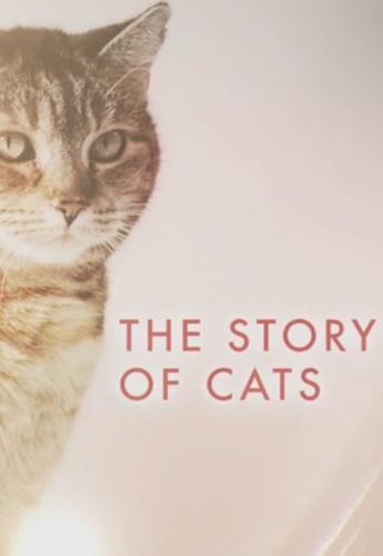 The Story of Cats next episode air date poster