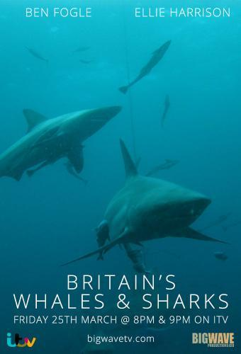 Britain's Whales and Sharks next episode air date poster