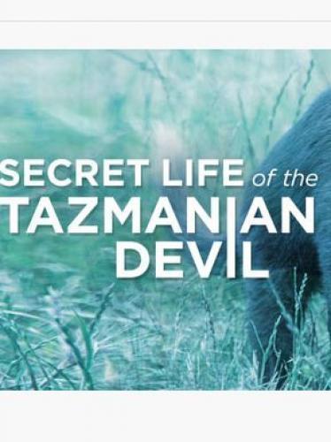 Secret Life of the Tasmanian Devil next episode air date poster