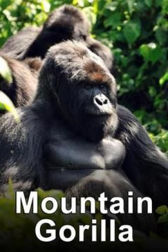 Mountain Gorilla: Mission Critical next episode air date poster
