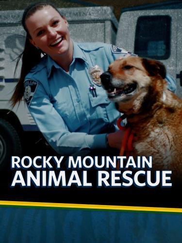 Animal Rescue dating sites dating online vragen te stellen